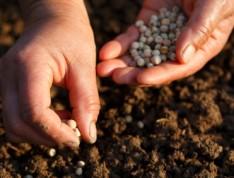 iStock_000014464248X-Planting-Seeds-234x178